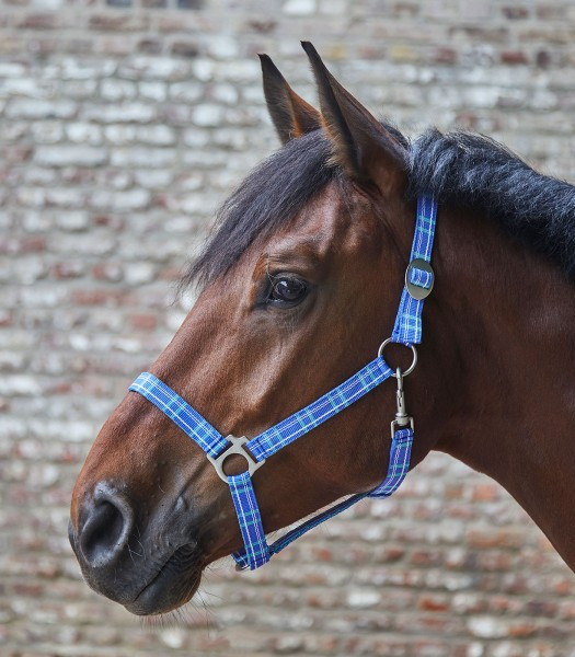 Nylonhalfter Pony, nightblue/taupe